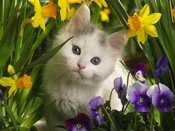 Cat (meo)-1