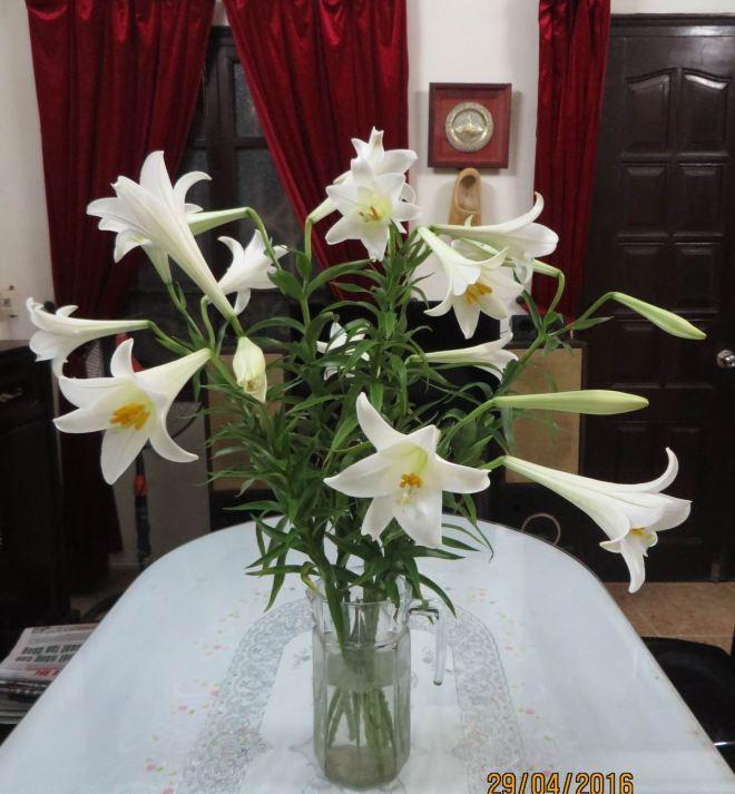 hoa loa ken 1
