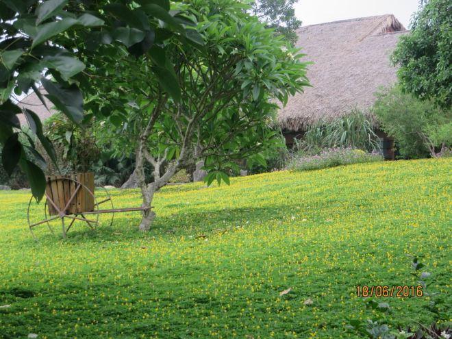 Hoa vang- co xanh 2